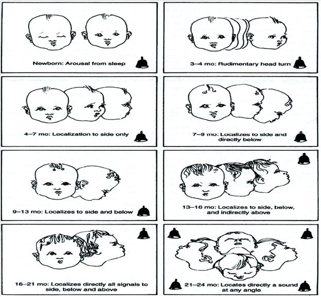 تکامل شنوایی نوزادان