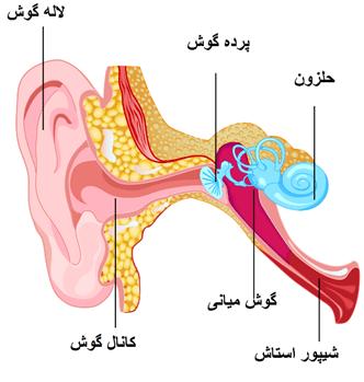 درمان کر شدن گوش