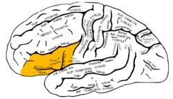 مناطق گفتاری